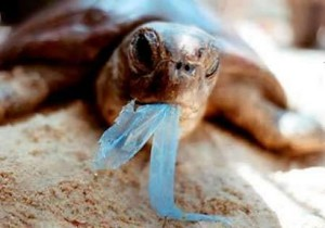 Effects of plastic in the ocean